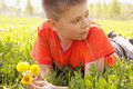 Kid on grass with dandelions looking sideways Royalty Free Stock Photo