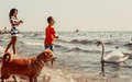 Kid and mother on beach have fun with swan. Royalty Free Stock Photo
