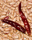 Kidney beans and red chilly Stock Photography