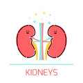 Kidney cartoon icon