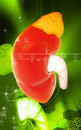 Kidney digital illustration of in colour background Royalty Free Stock Photos