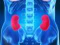 Kidneys Royalty Free Stock Photography
