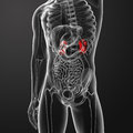Kidneys d rendered illustration of Stock Photos