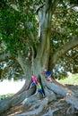 Kids climbing huge tree Royalty Free Stock Photo