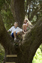 Kids climbing in huge tree Royalty Free Stock Photo