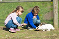 Kids feeding rabbits Royalty Free Stock Photo
