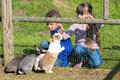Kids feeding rabbits boy and girl outside during spring time Stock Photos