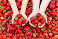 Kids hands with strawberries. Royalty Free Stock Photo