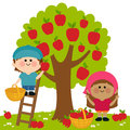 Kids harvesting apples vector illustration of two children a boy and a girl picking under an apple tree boy is on a ladder picking Royalty Free Stock Photos