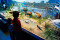Kids at natural history museum looking displays of wild birds in Stock Image