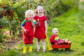 Kids picking apples in fruit garden Royalty Free Stock Photo