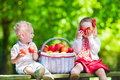 Kids picking fresh apples child on a farm in autumn little girl and boy playing in apple tree orchard pick fruit in a basket Stock Images