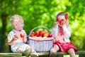 Kids picking fresh apples