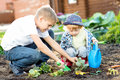 Kids planting strawberry seedling into fertile soil outside in garden Royalty Free Stock Photo
