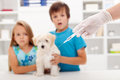 Kids at the veterinary doctor with their pet Stock Photography