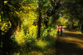 Kids walking in mystical morning Royalty Free Stock Image