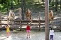 Kids at the zoo girls feeding giraffes Stock Photos