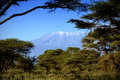 Kilimanjaro in amboseli kenya tanzania Stock Image