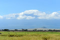 Kilimanjaro snow on top of mount in amboseli Royalty Free Stock Photos