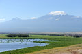 Kilimanjaro snow on top of mount in amboseli Royalty Free Stock Image