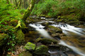 Killarney National Park creek Royalty Free Stock Photography