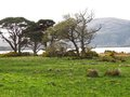 Killarney national park a view of the ireland Stock Photography