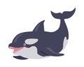 Killer Whale Cartoon Flat Vector Illustration