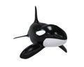 Killer Whale Royalty Free Stock Photo