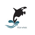 Killer whale jumping out of water with splashes Royalty Free Stock Photos