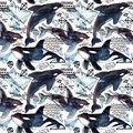 Killer whale seamless pattern. Royalty Free Stock Photo