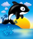 Killer whale with sunset Royalty Free Stock Photo
