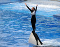 Killer whale trainer Royalty Free Stock Images
