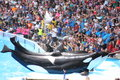 Killer whales performing at seaworld Stock Photo