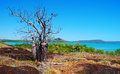 Kimberley coast a beautiful boab tree on western australia Stock Image