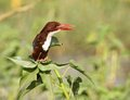 KING FISHER Royalty Free Stock Photo