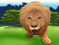 King of the jungle illustration a big lion Stock Images