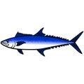 King Mackerel Fish Royalty Free Stock Photo