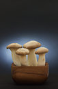 King oyster mushroom large eryngii mushrooms in a wooden bowl eryngii is also called trumpet or french horn Stock Photo
