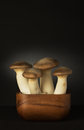 King oyster mushroom large eryngii mushrooms in a wooden bowl eryngii is also called trumpet or french horn Stock Image