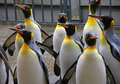 King Penguin 2 Royalty Free Stock Photos