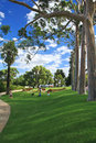 King's Park in Perth, Western Australia Royalty Free Stock Photography