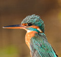 Kingfisher details of beak and plumage of the Royalty Free Stock Photo