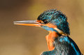 Kingfisher details of beak and plumage of the Stock Photo