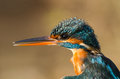 Kingfisher details of beak and plumage of the Royalty Free Stock Photography