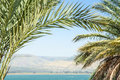 Kinneret lake or galilee sea and golan heights in the palm leaves with clear blue sky Royalty Free Stock Image
