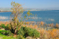 Kinneret lake. Israel. Stock Photography