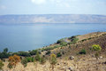 Kinneret trees on the bank of lake israel Royalty Free Stock Photo
