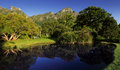 Kirstenbosch botanical garden pond in suburb of cape town western cape south africa Royalty Free Stock Photography