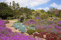 Kirstenbosch Botanical Gardens Stock Image