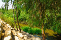 Kishon park haamakim park the stream and in northern israel Stock Photography